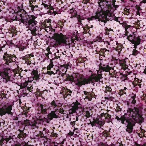 Flor mel