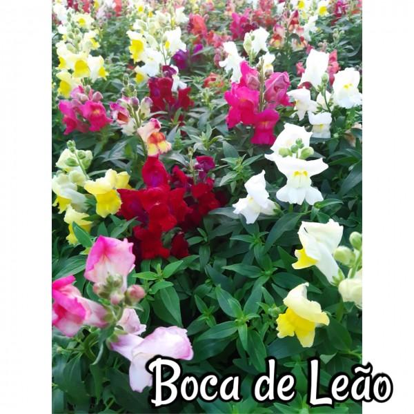 Boca de Leão
